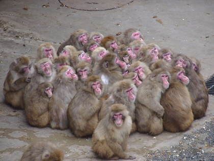 出典 動物が群れを作るのはなんで? - 生物史から、自然の摂理を読み解く