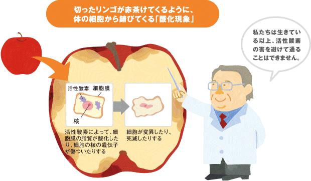 活性酸素 リンゴ
