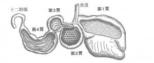 「ウシの4つの胃」
