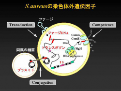 httpwww.md.tsukuba.ac.jpcnmtMedtecTJMSTJMS1(1)-8(ohta).pdf