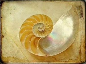 渦巻き/貝