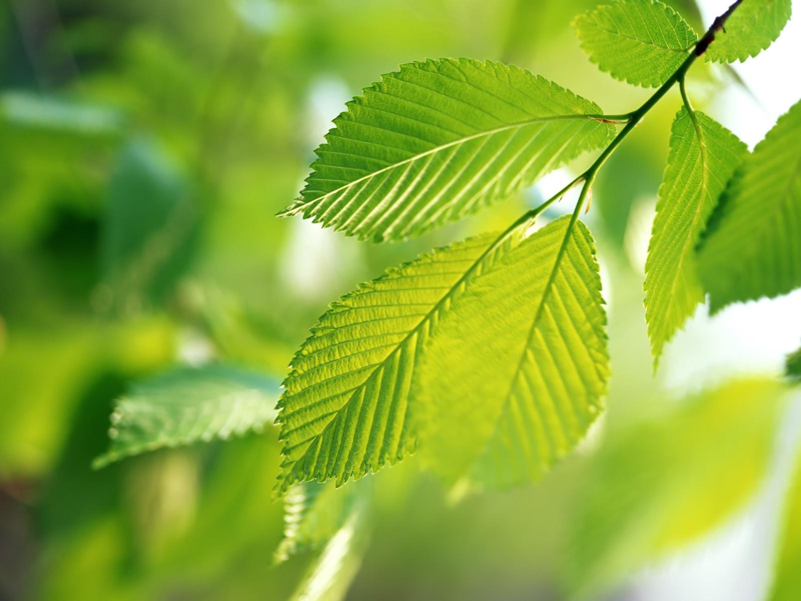 植物が進化した理由は、緑色の光...