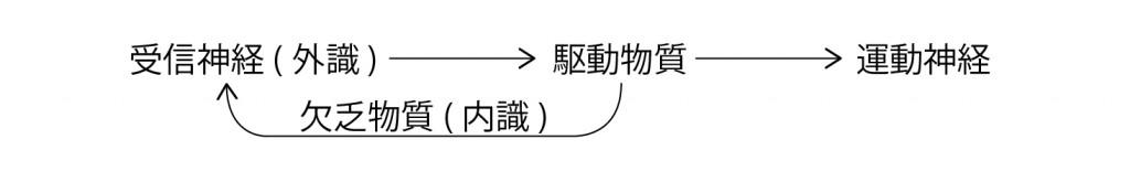 脳回路の仕組み3 図解_アートボード 1