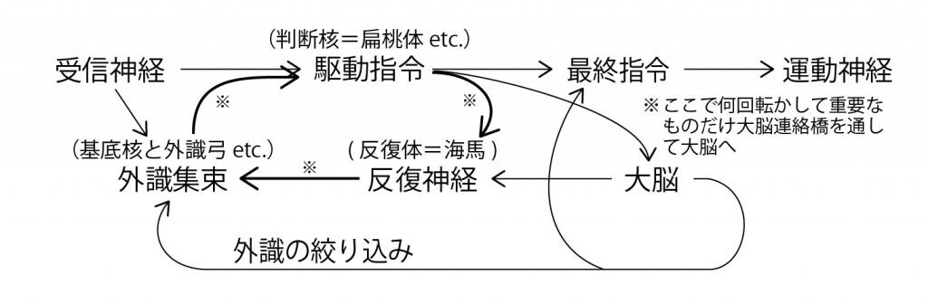 脳回路の仕組み3 図解-03