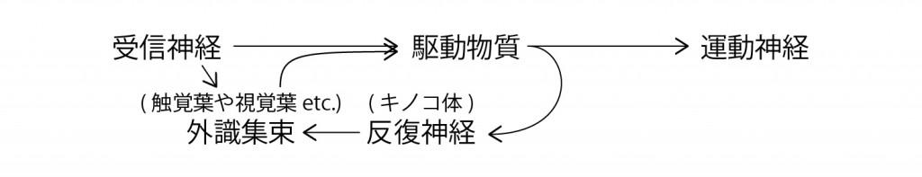 脳回路の仕組み3 図解-02