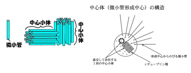 中心体 合体のコピー