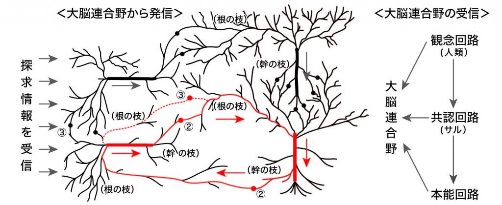 脳回路の仕組み12-01
