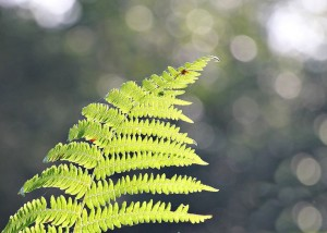 02_735x525_photosynthetic_fern