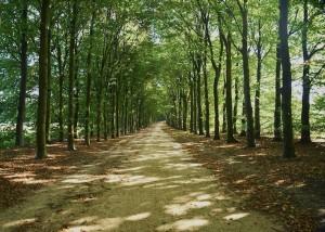 05_735x525_treelined_road