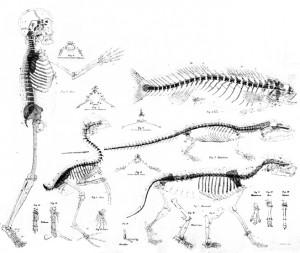 1_skeletons