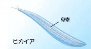 Microsoft Word - 実現塾 カンブリア以降-01