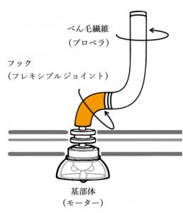1_20190827-flagellum-diagram-japanese