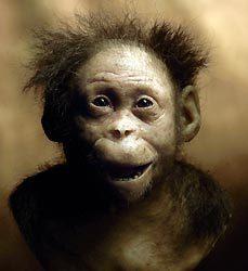 330万年前のアファール猿人の女...